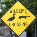 assorted-wildlife-crossing-australia