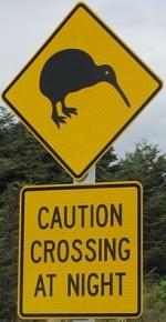 kiwi-zone-at-night-sign-nz