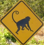 monkey-crossing-sign-costa-rica
