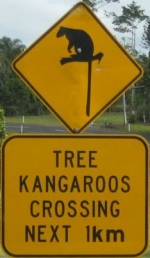 tree-kangaroo-crossing-sign-australia