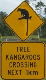 tree-kangaroo-crossing-sign-australia