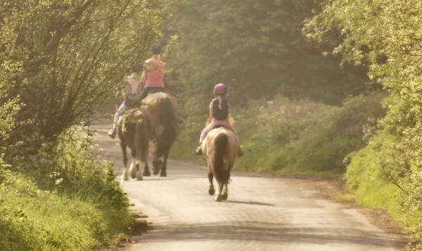 three horses on the road