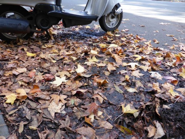 leaves on the road with scooter